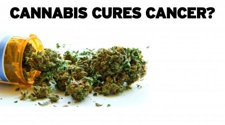 Cannabis Cures Cancer?