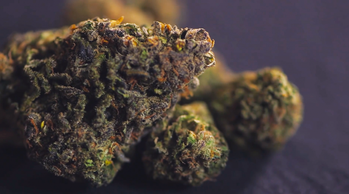 Leafly's Cannabis 101   Visual Quality Guide
