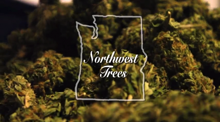 Northwest Trees | Marijuana Documentary