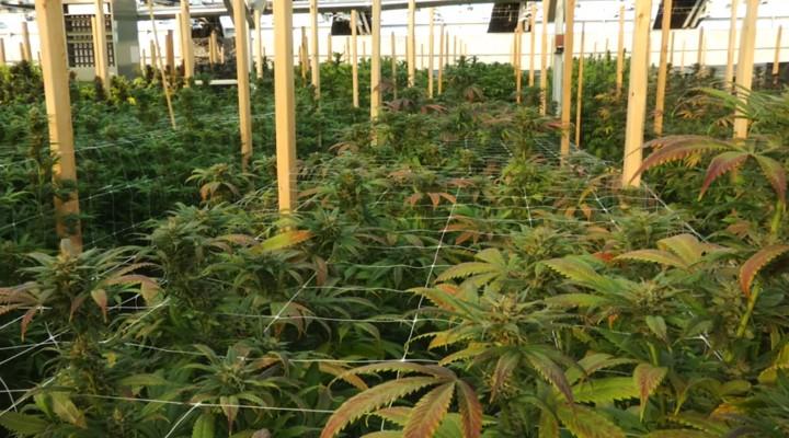 Cannasseur Organic Grow