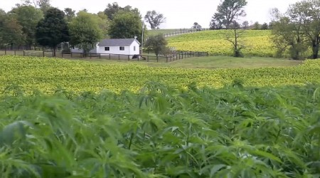 Is Hemp Farming, Beating Big Tabacco!?