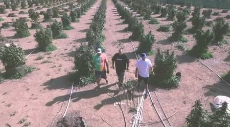 Marijuana Mania | Episode 1