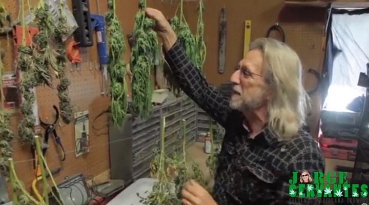 Jorge Cervantes | Tips: Drying Big Buds