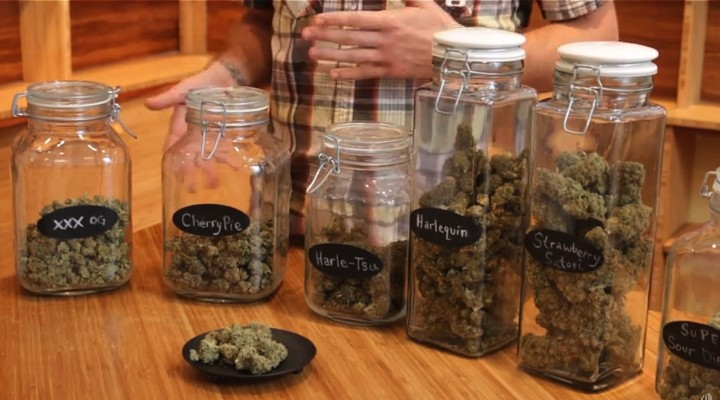 Marijuana Strain Guide For Beginners