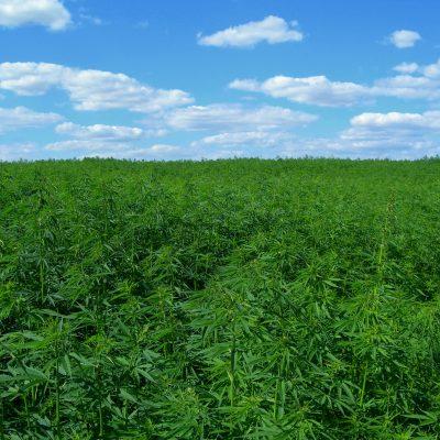 The Bulletin tells us about hemp farmers challenges establishing Oregon's third cannabis industry
