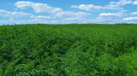 The Bulletin tells us about hemp farmers challenges establishing Oregon's third cannabis industry